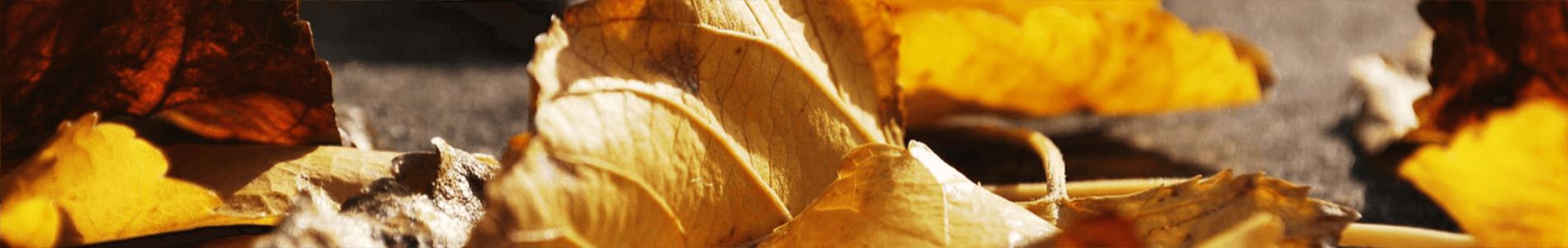 feuilles d'automne tombées au sol