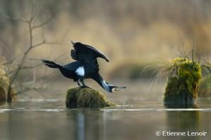 Photo Etienne Lenoir: visitez son site web