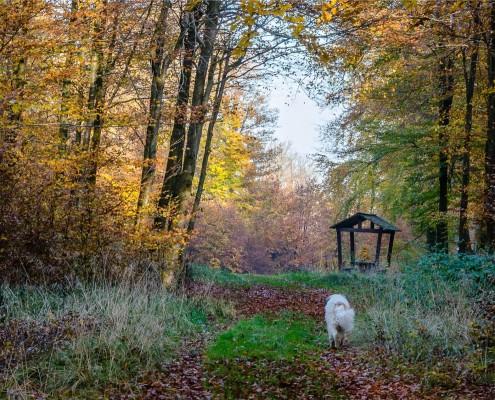 Balade aux Epioux en automne - Chiny si - photo de Florence Dumont